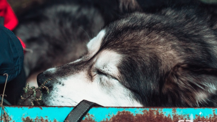 «Авто начало дымить»: вСамаре пристав спас собаку из припаркованной машины