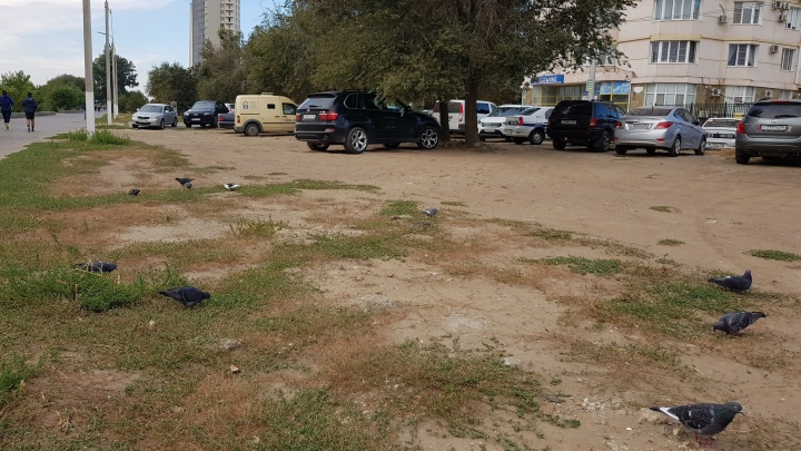 «Деревьев нет»: аллея в центре Волгограда умирает под колесами элитных машин и маршруток