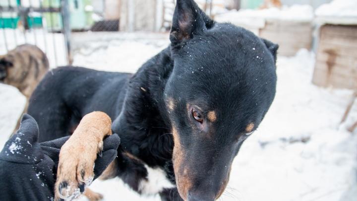 В Самарской области увеличили расходы на отлов бездомных животных