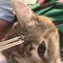 Карен Даллакян спас кота, который три дня проходил с пулей в голове