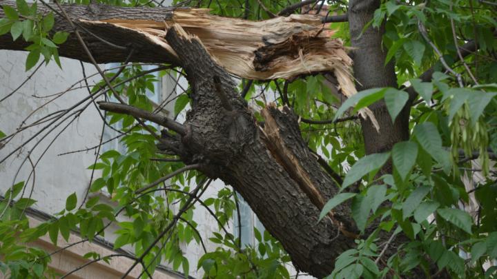 Ураган разбушевался: в Башкирии без света остались 700 домов