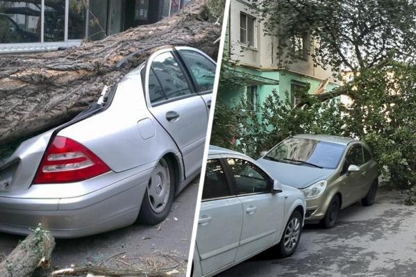 В Ростове деревья падают на машины часто
