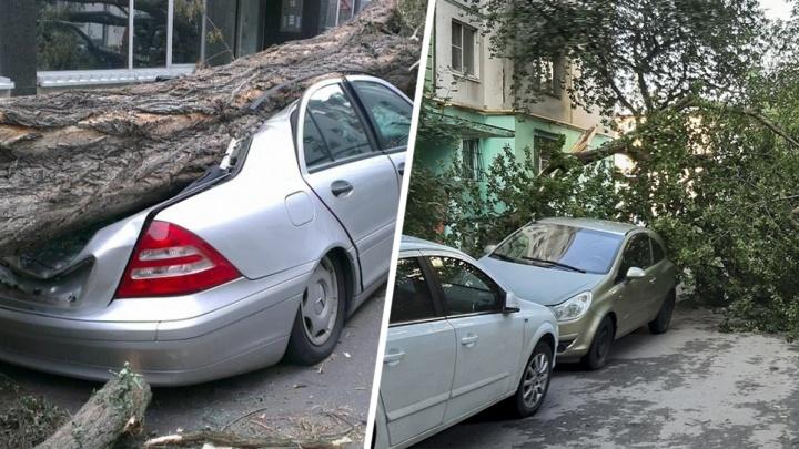 Что делать, если на ваш автомобиль упало дерево в Ростовской области?
