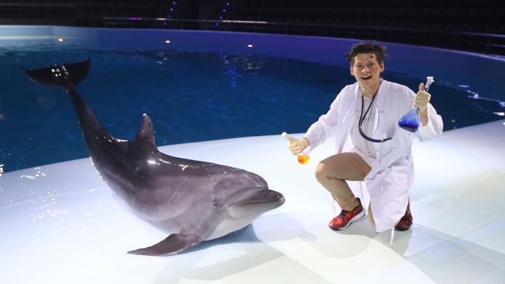В дельфинарии в декабре пройдет премьера нового шоус дельфинами, белухами и новосибирскими актерами