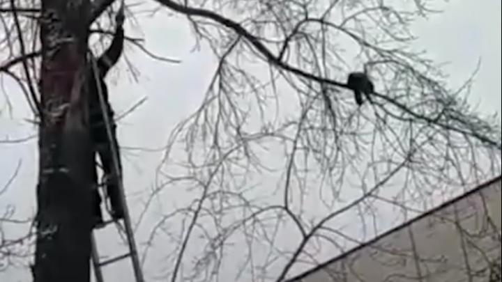 «Увидели спасателей и лестницу»: северодвинец снял на видео, как МЧС помогло коту слезть с дерева
