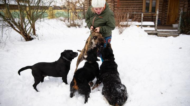 «Я — главная сука в их стае»: как екатеринбурженка спасает брошенных ротвейлеров