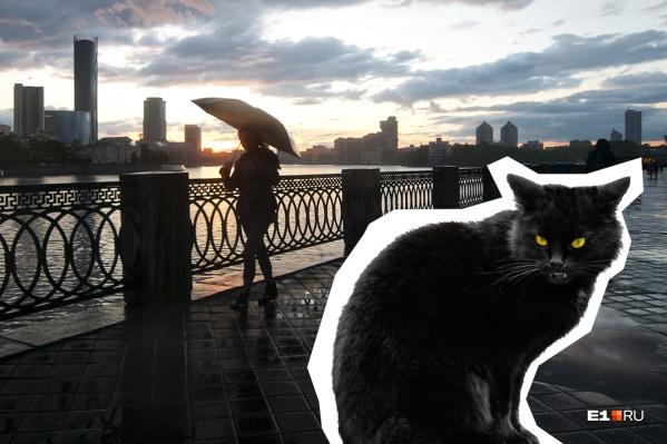 Найти черного кота в Екатеринбурге — к счастью