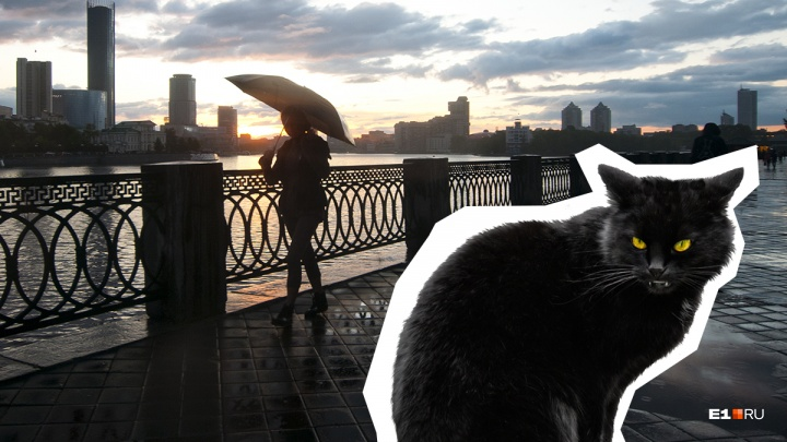 Найди черного кота, пока он не перешел тебе дорогу! Игра E1.RU на пятницу, 13-е