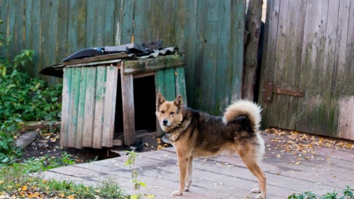 Почтальонам в Ярославской области раздадут больше тысячи отпугивателей собак