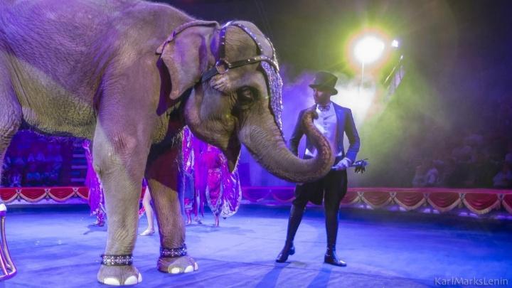 Тюменские пожарные спасли цирковую слониху Ранго от сильной зубной боли