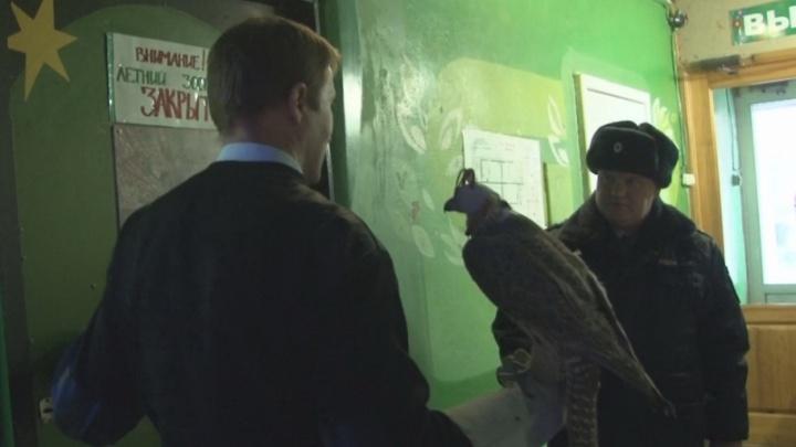 В Омской области троих контрабандистов приговорили к колонии за вывоз птиц для арабских шейхов