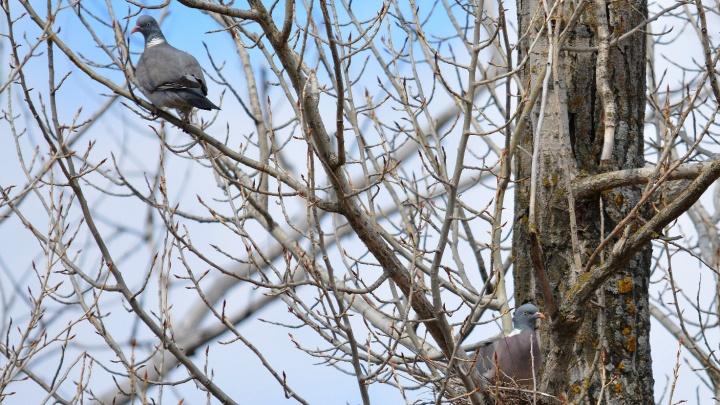 «Многие ищут пару на один сезон»: в Волгоградскую область пришел сезон птичьих свадеб