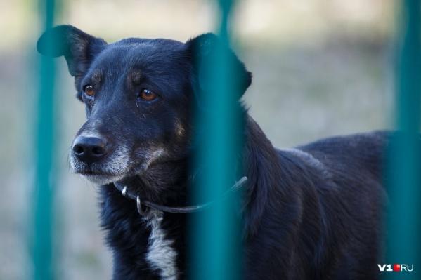 Зоозащитники потребуют ужесточения наказания за издевательства над животными