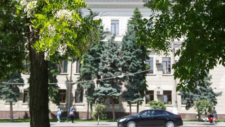 Лето еще не прощается: к концу недели остывший Волгоград согреется до +25 градусов