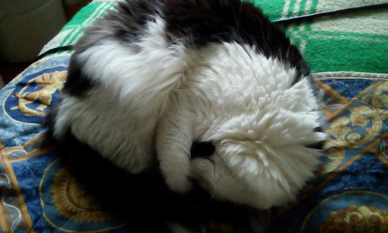 Коты прячут нос от мороза