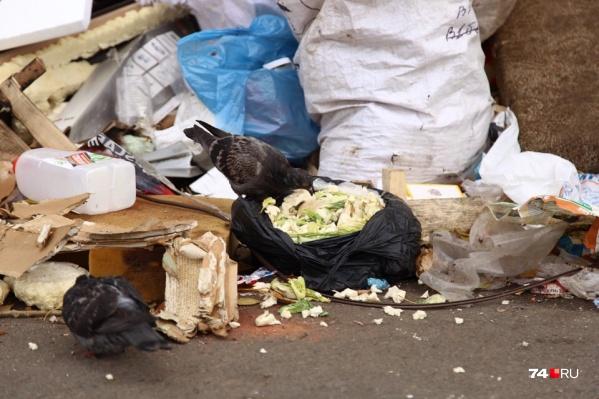 Контракт признали недействительным, но мусор продолжают вывозить