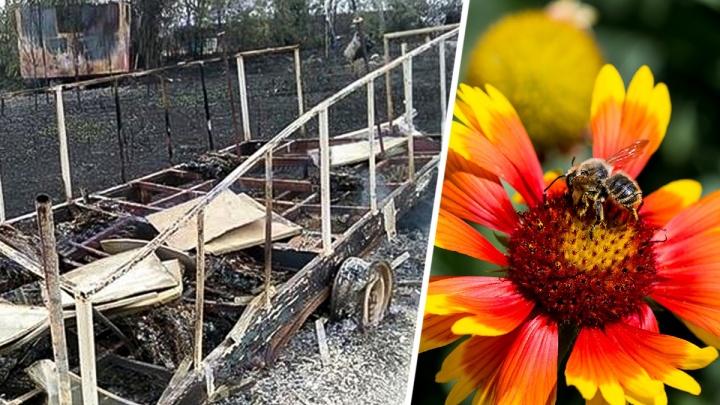 Под Новочеркасском при пожаре сгорели сотни пчел. Пасечники винят военных