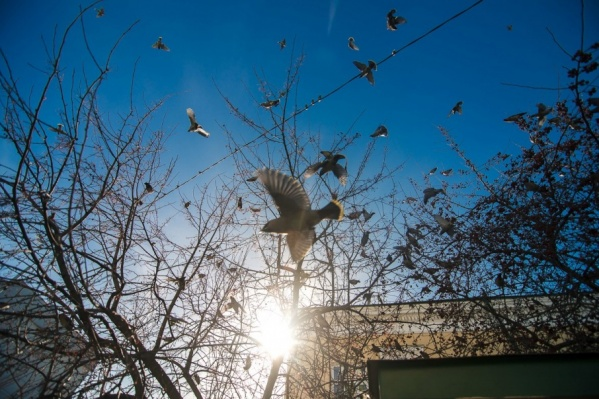 Тюменцев предупреждают о приближающихся заморозках