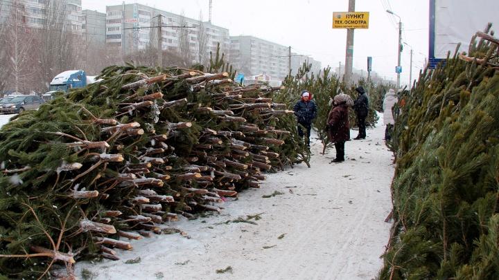 В Омске открывают ёлочные базары: ищем ближайший на карте