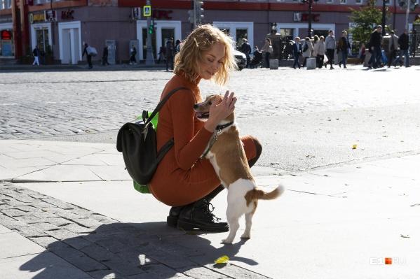 Защитить и спасти попавшую в беду собаку может только хозяин