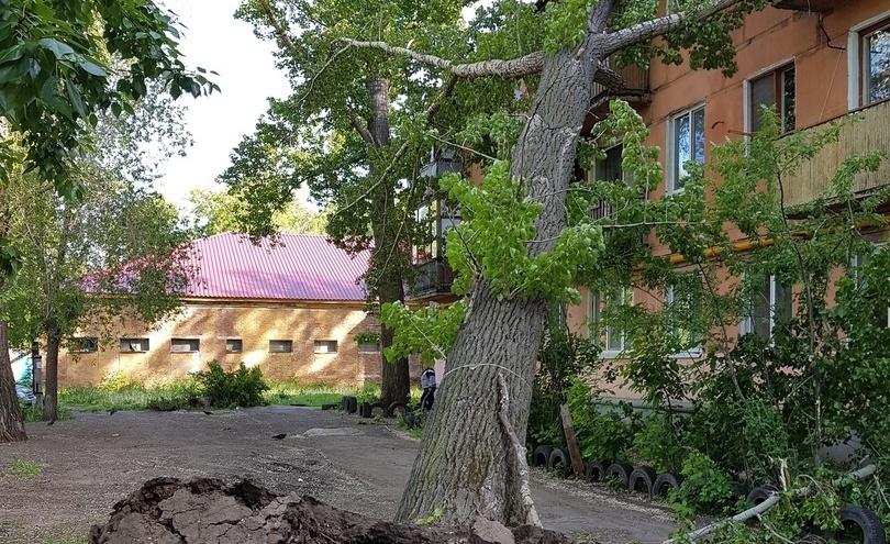 В Самаре дерево рухнуло на жилой дом