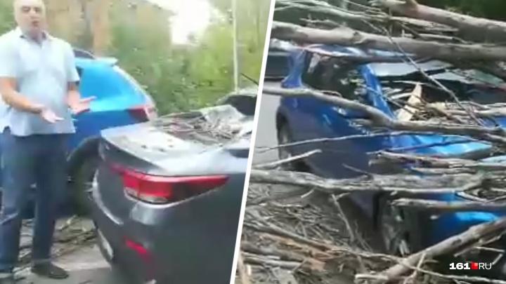 На Вавилова во время бури рухнули два дерева