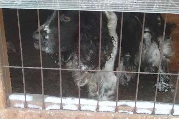 Собаку выпустили погулять и с тех пор не видели, нашли её только спустя 4 года