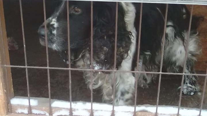 «Думали, что его разорвали»: хозяину вернули собаку, пропавшую под Новосибирском 4 года назад