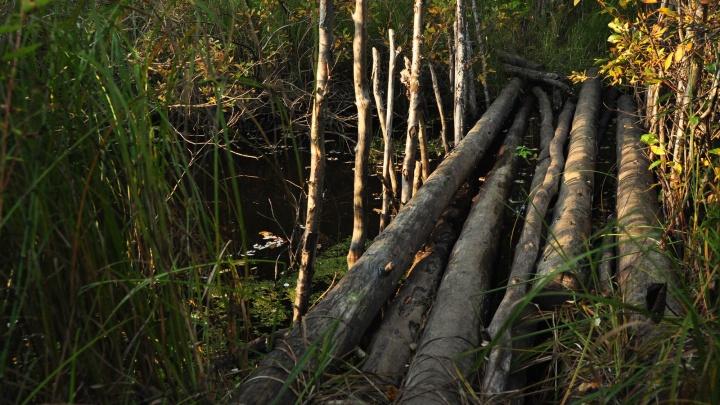 В Поморье начнут следить из космоса за вырубкой лесов
