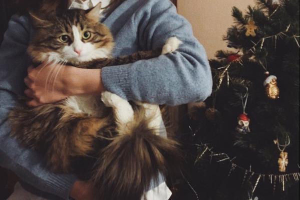 Новый год был у каждого свой — кошки тоже встретили год Мыши со своими хозяевами