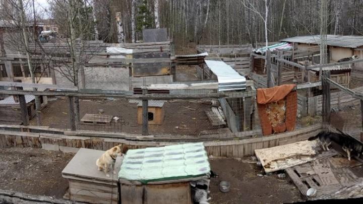 В новосибирском приюте для собак разломали старые вольеры