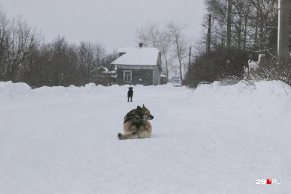 По-зимнему тихо встречают гостей из города кегостровские собаки