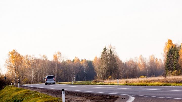 В Ярославской области лось бросился под колёса автобуса: на месте работали медики
