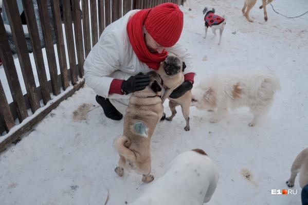 В «МопсоДоме» живут собаки, которые ищут новый дом