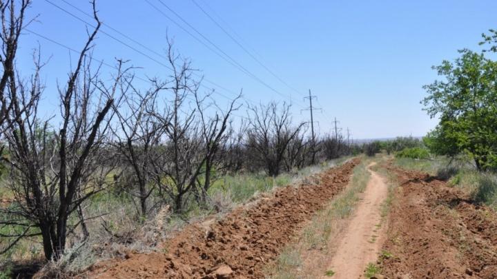 Экологи: в Волгограде стремительно вымирают городские леса