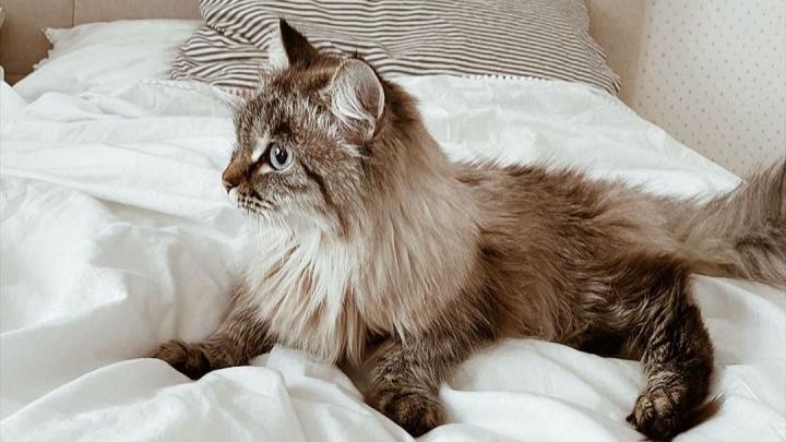 «Рождественская сказка»: девушка нашла потерявшуюся кошку спустя полгода на другом конце города