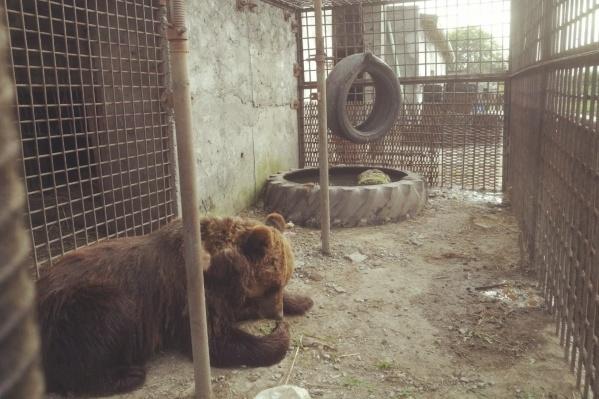 По словам хозяина медведя, пострадавший знал, что подходить к животному было запрещено, но всё равно засунул руку в вольер