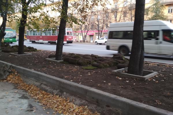 Сейчас к забетонированным деревьям привезли рулонный газон