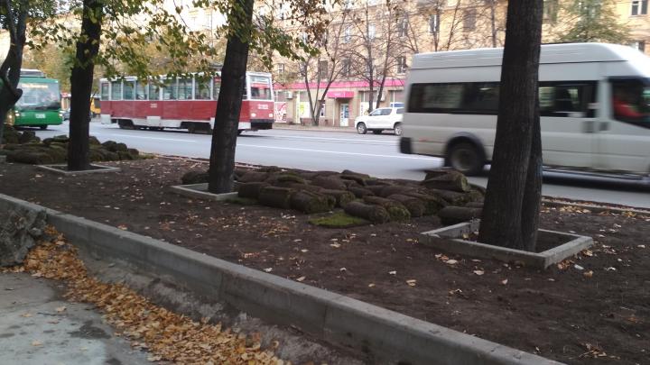 На Богдашке забетонировали деревья на тротуарах