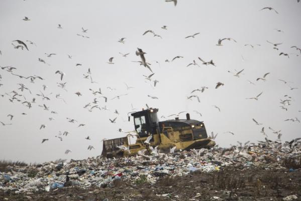 На полигоне должен разместиться мусор из Архангельска, Северодвинска, Новодвинска, Приморского и Холмогорского муниципального районов