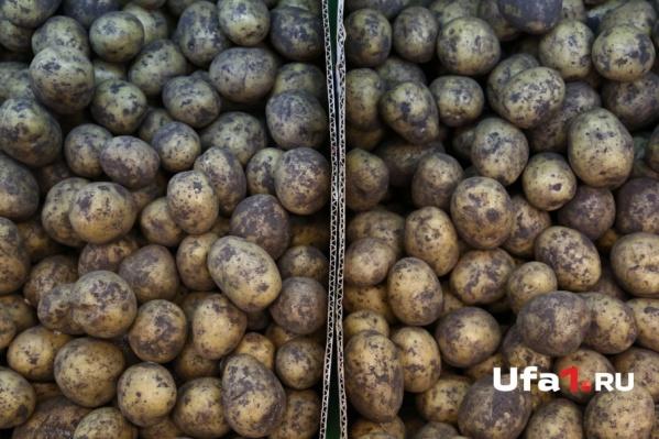 Свою картошку по-прежнему можно будет купить у бабулек