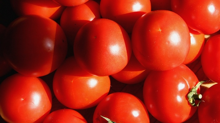 Промахнулись: 17 тонн томатов должны были доставить в Москву, но привезли почему-то в Петухово