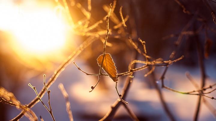 Очередное потепление и небольшой снег: какая погода ожидает тюменцев 10–14 декабря