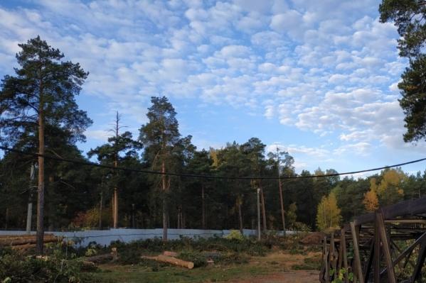 В челябинском бору планомерно рубят деревья уже несколько лет