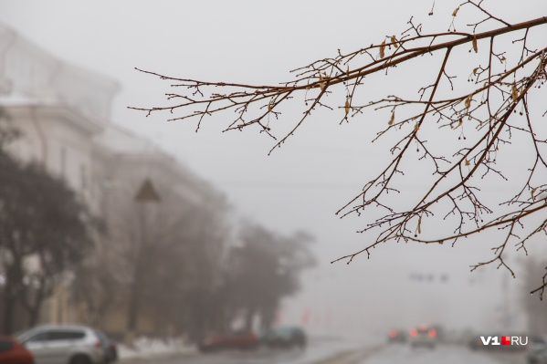 В этом году Волгоградская область вновь не дождалась настоящих крещенских морозов
