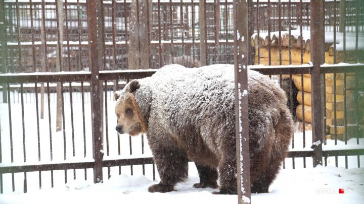 Спят усталые зверушки: в национальном парке «Башкирия» медведи ушли в спячку