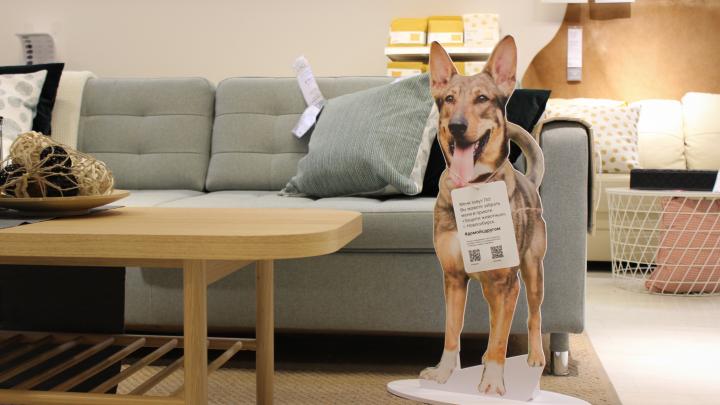 В ИКЕА поставили картонные фигуры собак из новосибирского приюта