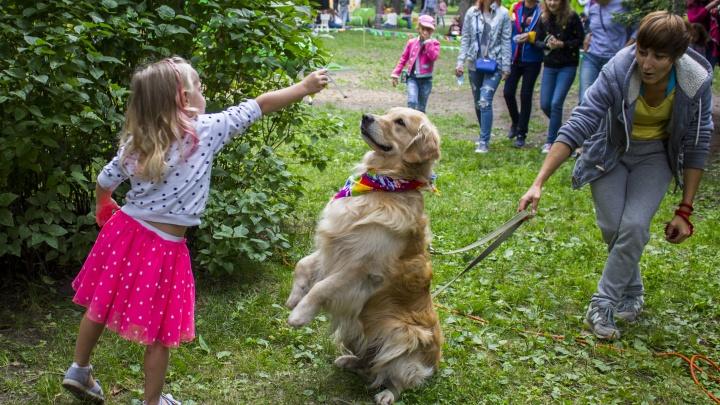 Породистые собаки пришли на фотосессию в Нарымский сквер: они собрали деньги для животных из приюта