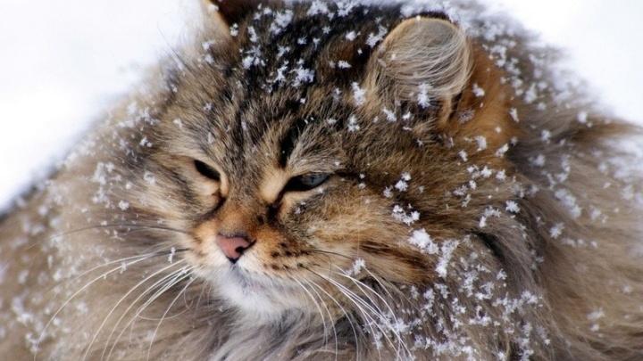 Как перестать мёрзнуть, простывать зимой, а сохранить тепло и здоровье