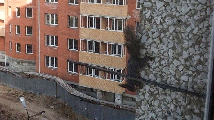 Белки в Академгородке лазят по стенам высоток ради орешков на подоконнике